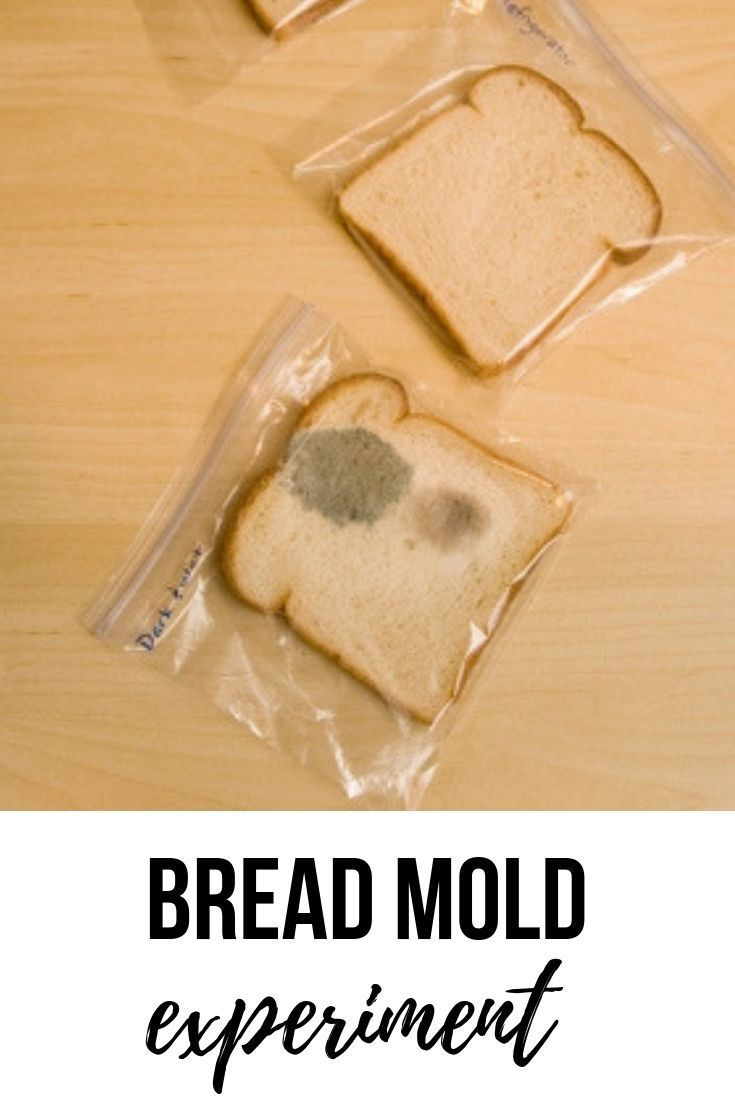Bread Mold Experiment Need An Easy And Inexpensive Life Science