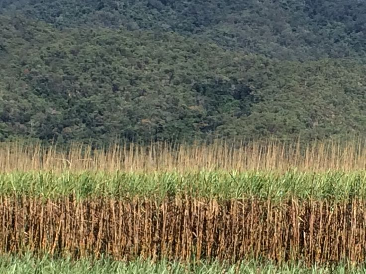 Cane fields n mountains . Heading back from Babinda to Cairns
