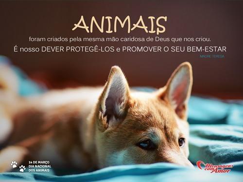 """""""Animais foram criados pela mesma mão caridosa de Deus  que nos criou. É nosso dever protegê-los e promover o seu bem-estar."""" 14 de Março #DiaDosAnimais"""