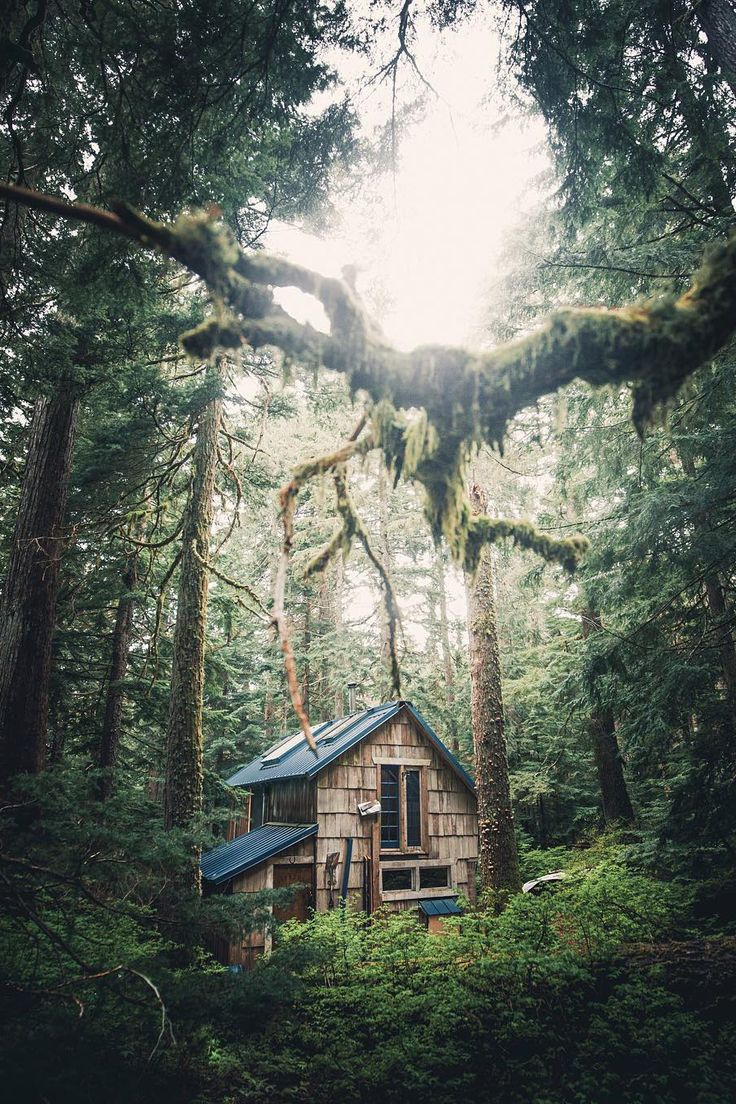Nestled in a quiet cathedral of tall trees softened with green moss and drawing in filtered light from above, this shingled charmer must feel magical inside. | Tiny Homes