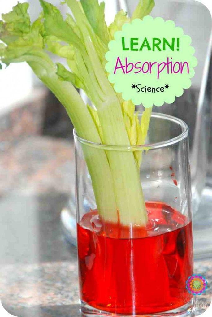 Expérience pour tester la capillarité des végétaux et prouver qu'ils sont vivants