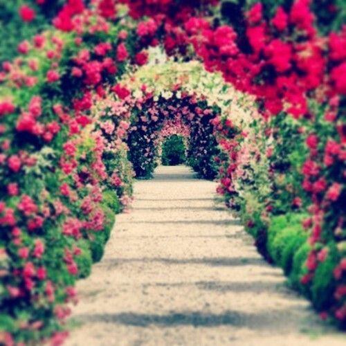 Nice-,- | http://gardeners-calendar.com ✿