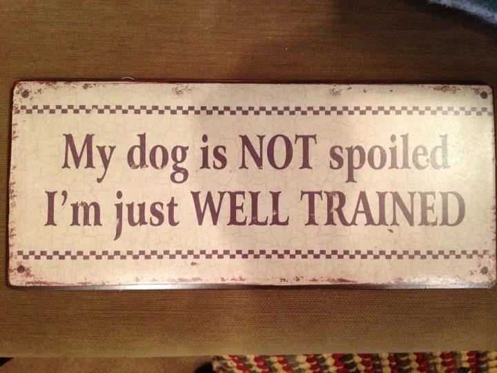 Yup - this is me!: Doggies Oggi, Dogs Pet, Quotes Ver, Pawsom Dogs, Crazy Dogs, Dump Pumps, Shih Tzu, Dogs Treats, Dogs Lady
