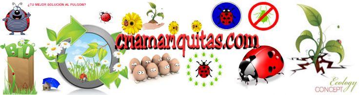 Mariquitas e Insectos Beneficiosos la solución al pulgón
