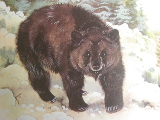 The name Atlas bear (Ursus arctos crowtheri) has been applied to an extinct population or populations of the brown bear in Africa. The Cantabrian brown bear likely was introduced to Africa from Spain by the Romans who imported Iberian bears for spectacles