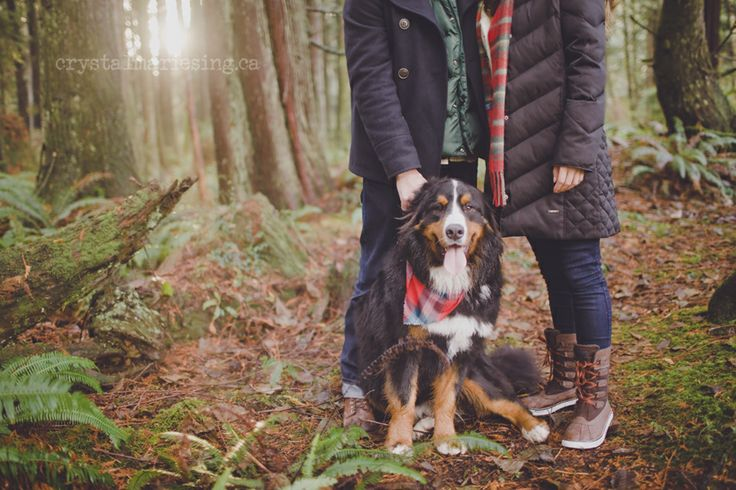 A walk in the woods. I love it when furry family members are included.