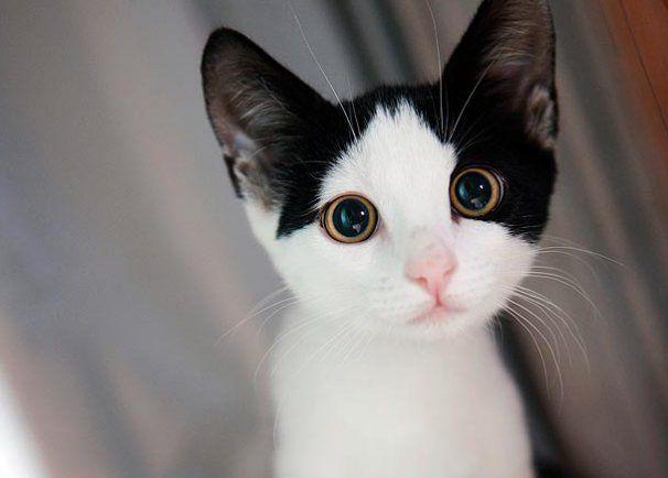 Too Cute! Kittens Photos : Too Cute: Animal Planet