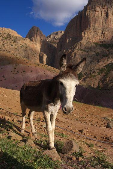 Climbing in Taghia, Morocco