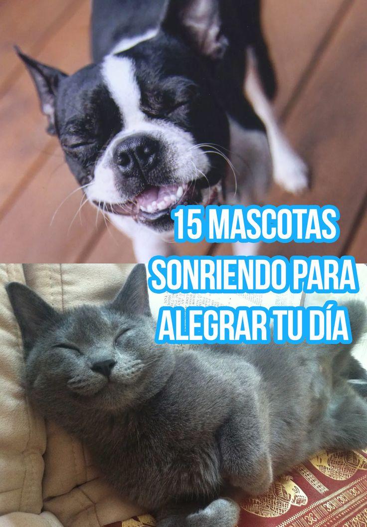 15 mascotas sonriendo para alegrar tu día