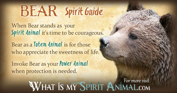 The most in-depth Bear Symbolism & Bear Meanings! Bear as a Spirit, Totem…