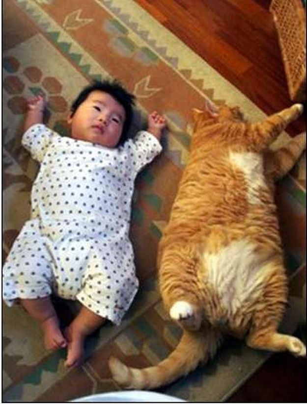 Chunky asian babies + overweight kitties = TOO CUTE FOR WORDS!