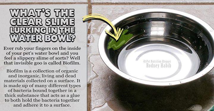 Best 25 Dog Water Bowls Ideas On Pinterest Dog Stuff