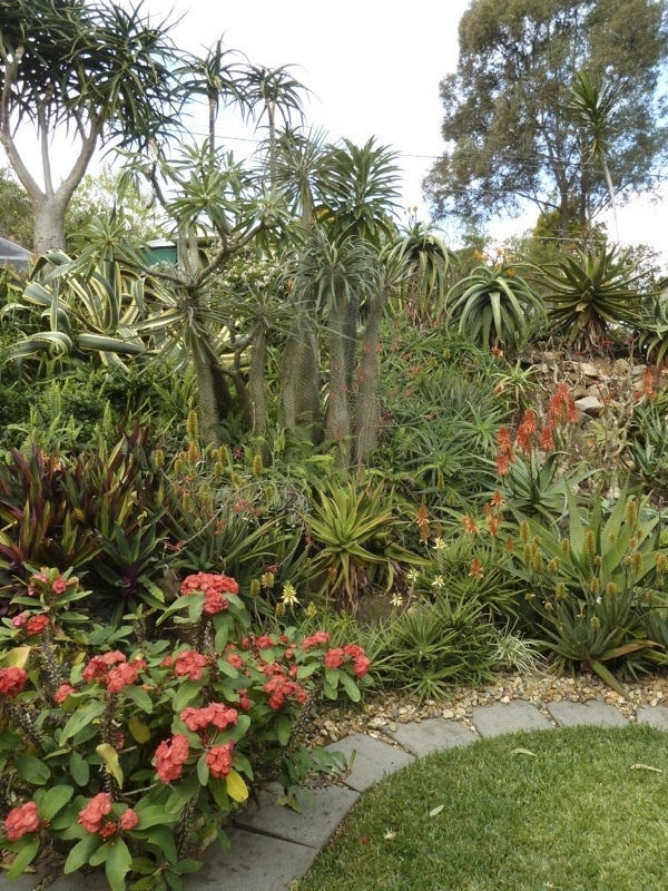 17 best images about best gardens aloes at taringa house for Garden design brisbane