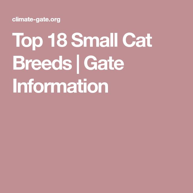 Top 18 Small Cat Breeds | Gate Information