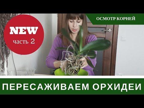 Как Пересаживать Орхидею Фаленопсис: Обновление - YouTube