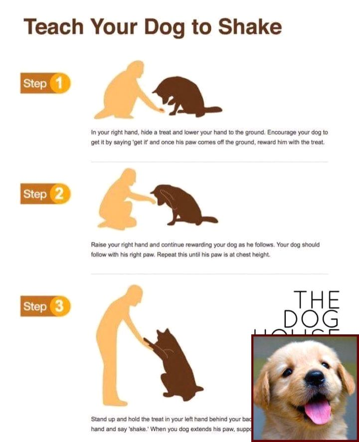 House Training A Puppy In 5 Days And Dog Training Courses In India