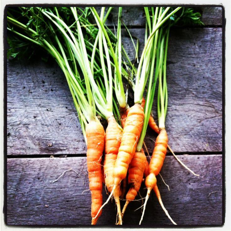 Cottage garden carrots