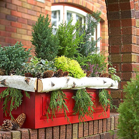 Planting containers with dwarf evergreen conifers is the perfect way to decorate your garden.