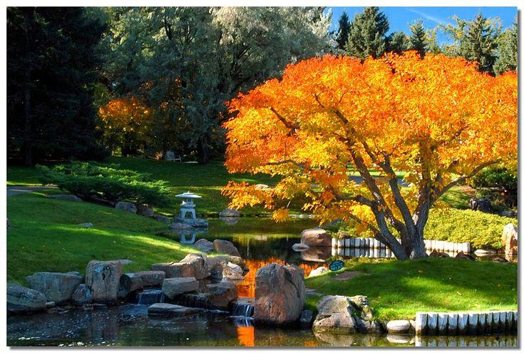 Fall Colors at Nikka Yuko #6 - Lethbridge, Alberta