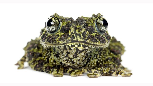 15 bizarre frog species | MNN - Mother Nature Network