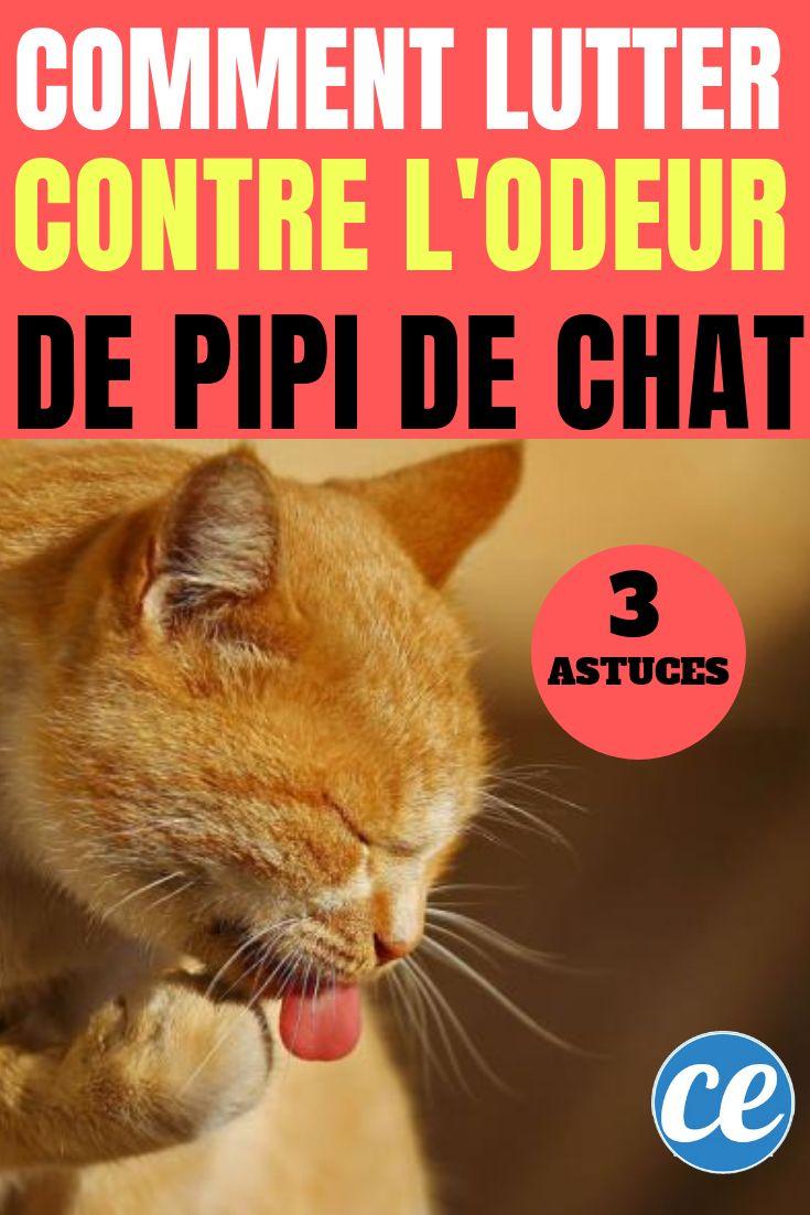 ¿Tu gato hace pipí en todas partes? Aquí se explica cómo eliminar el olor a orina de gato …