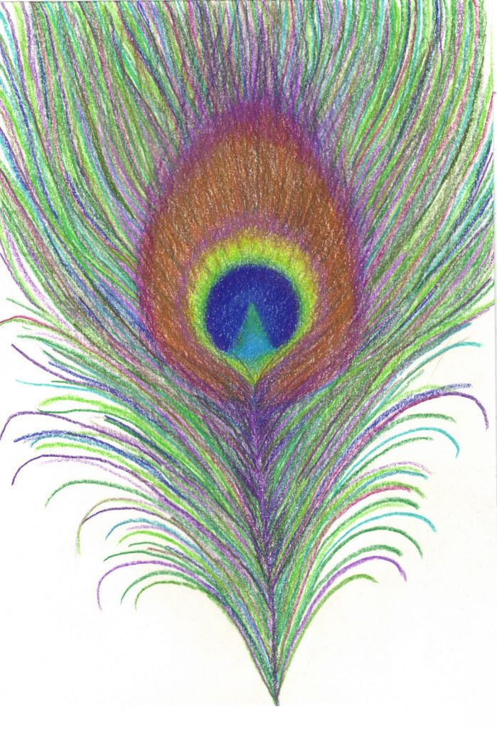 Drawing Pencil Peacock Feathers Drawing Library With Images Feather Drawing Peacock Feather Drawing Peacock Sketch
