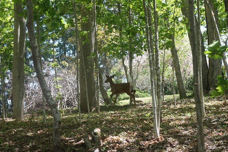 Had My Camera; Saw a Deer