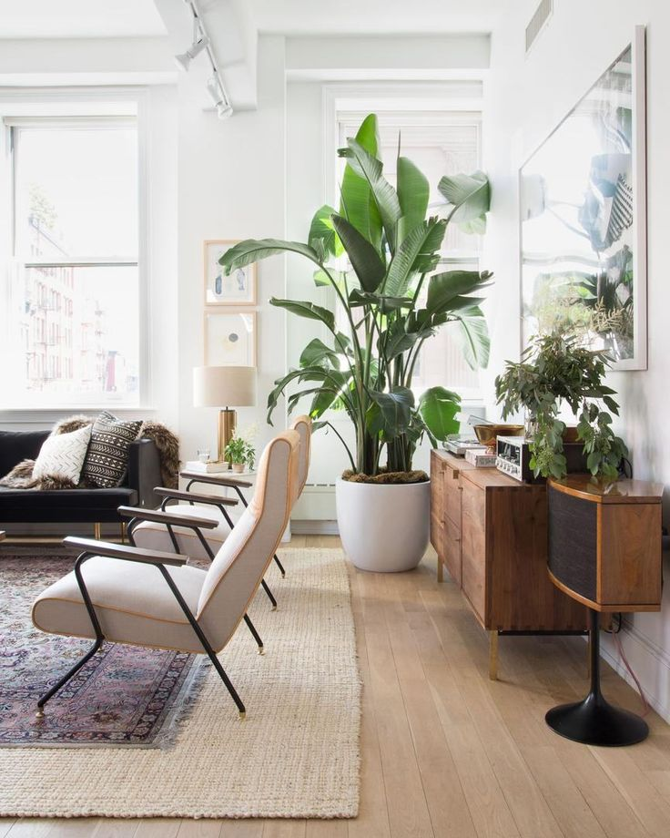 Everyone's freaking out because it's finally going to snow in New York but we're all over here like yeah mmhmm ok but like why care about that when you can care about THIS? Someone please make us into a sandwich outta that perfectly gargantuan banana leaf  and those v sexy @anthropologie chairs then consider us set for the weekend. // Design by #Homepolish CEO @noa_santos for the @sweetgreen founders  photo by @claireesparros. [LINK IN PROFILE] by homepolish