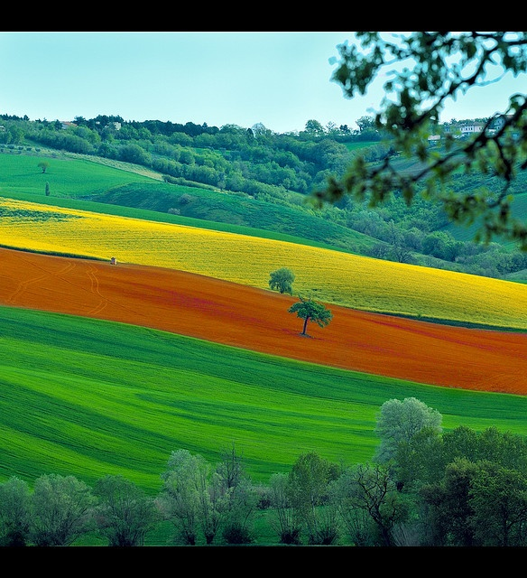 Rural-Landscape. Marche-Italy.