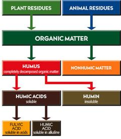Humic matter is formed through the chemical and biological humification of plant and animal matter and through the biological activities of micro-organisms. The biological center, the main fraction of natural humic matter, are the humic acids, which contain humic acid and fulvic acid. Humic acids are an excellent natural and organic way to provide plants and soil with a concentrated dose of essential nutrients, vitamins and trace elements.
