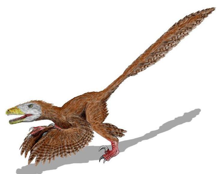 Elisabeth Vrba: ¿el clima nos hizo humanos? Exaptación: recreación del dinosaurio con plumas.