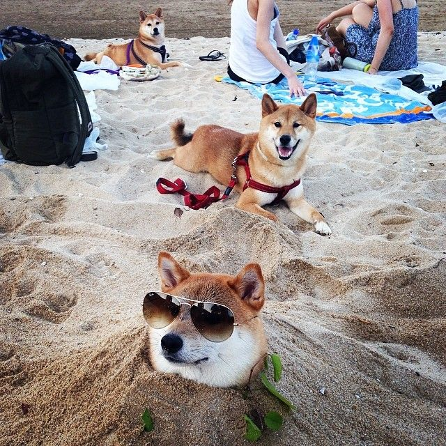 Much beach Very wow So dog!