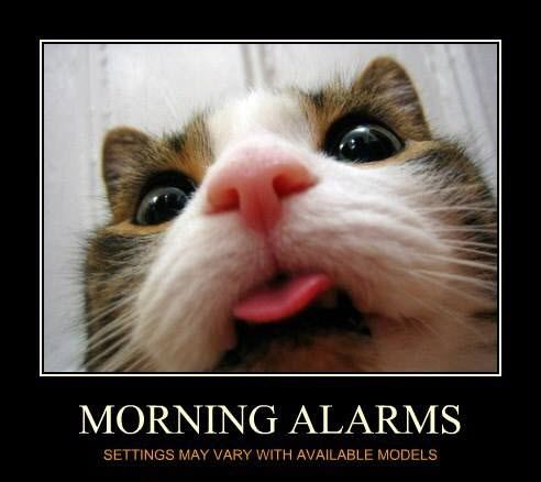 Yep, this is how I get woken up….how about you?