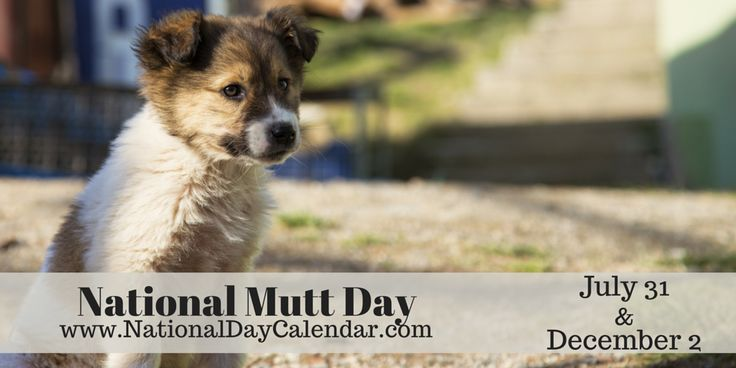 National Mutt Day - July 31 and December 2 (1)