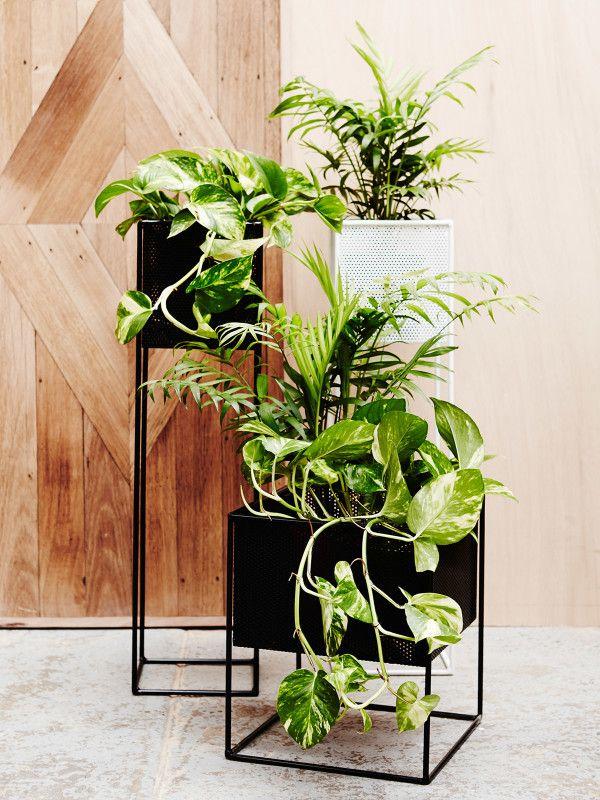 17 Best Ideas About Plant Holders On Pinterest Macrame