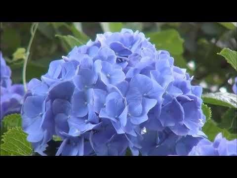 ❤ Música maravilhosa para relaxar♫piano suave e violino, imagens belíssimas ao vivo! - YouTube