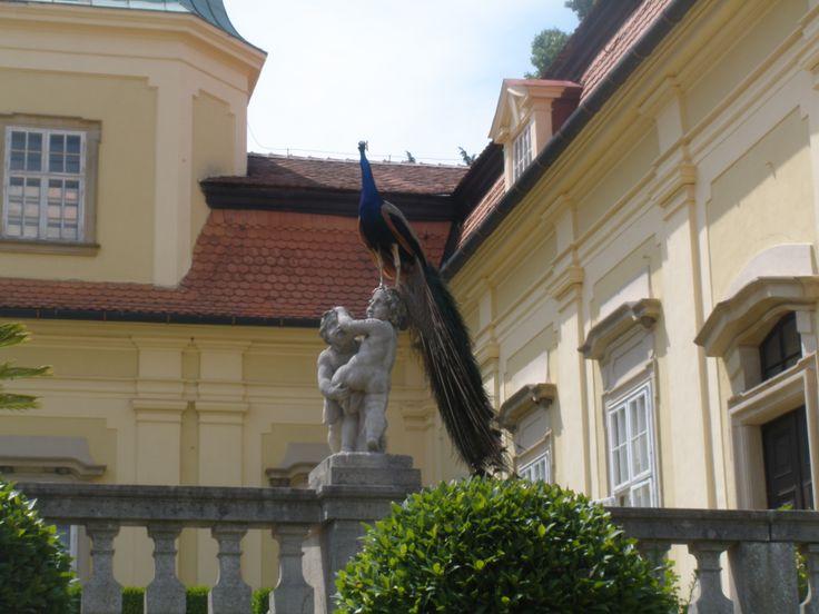 páv-zámek Buchlovice