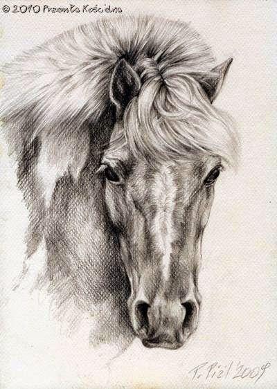 """""""Pony"""" horse portrait, pencil drawing by Przemila Koscielna"""