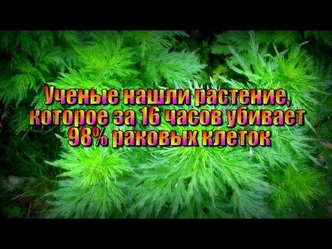 Растение, которое за 16 часов убивает 98% раковых клеток! - YouTube