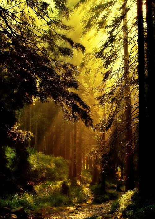 Golden Forest, Lithuania