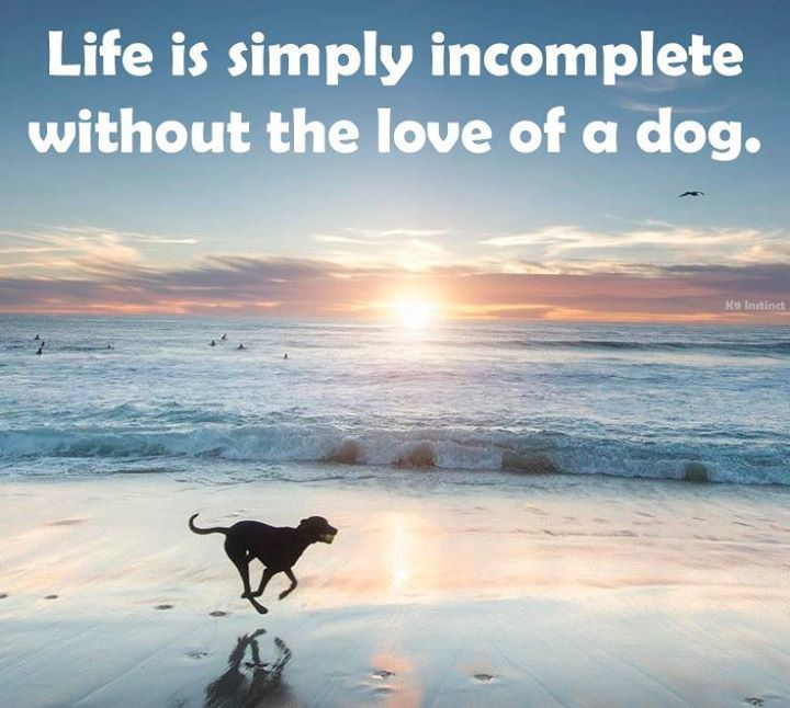 I can't imagine life without my dog! Share if you agree!