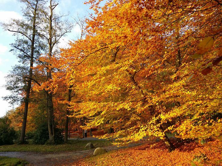 Amazing Sonsbeek Park