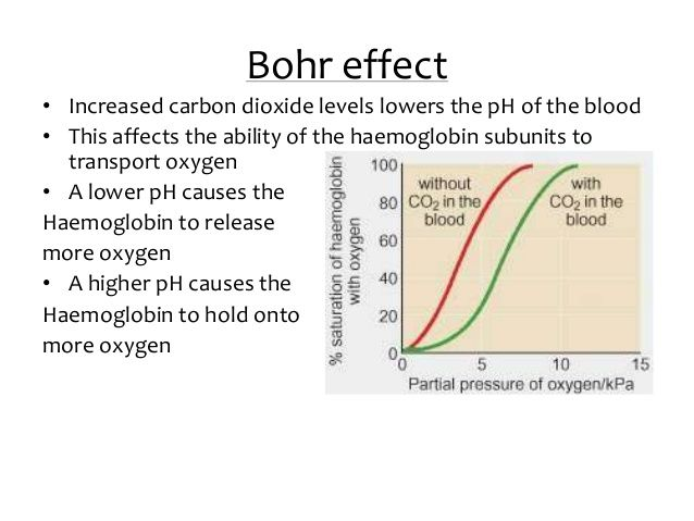 Bohr Effect - Google Search