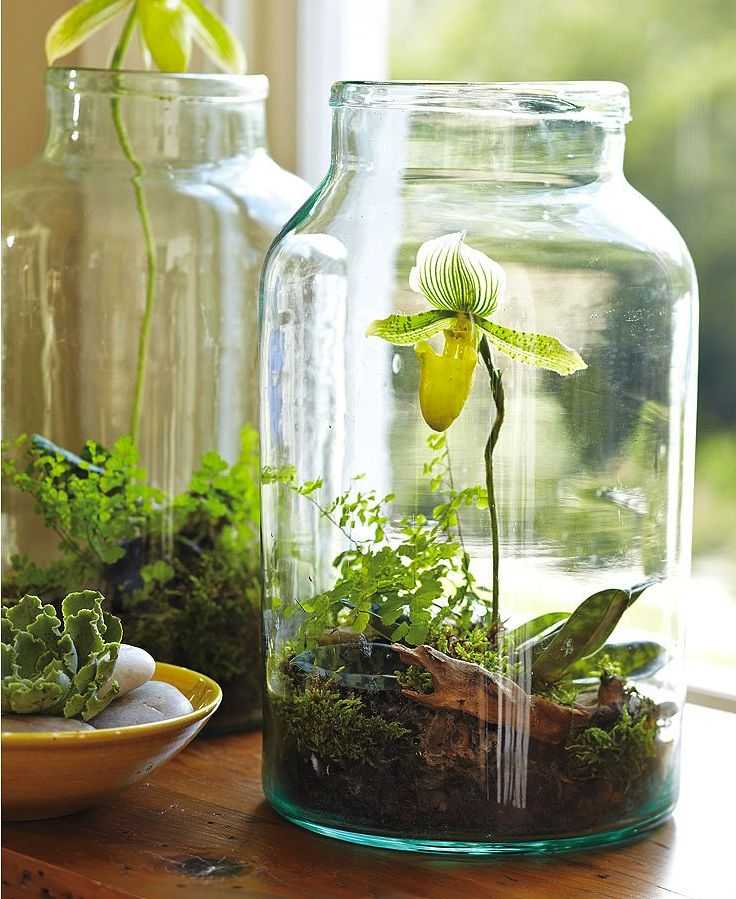 In an empty jar, place soil, moss, leaves, and a small plant to create a mini garden you can put around your home!