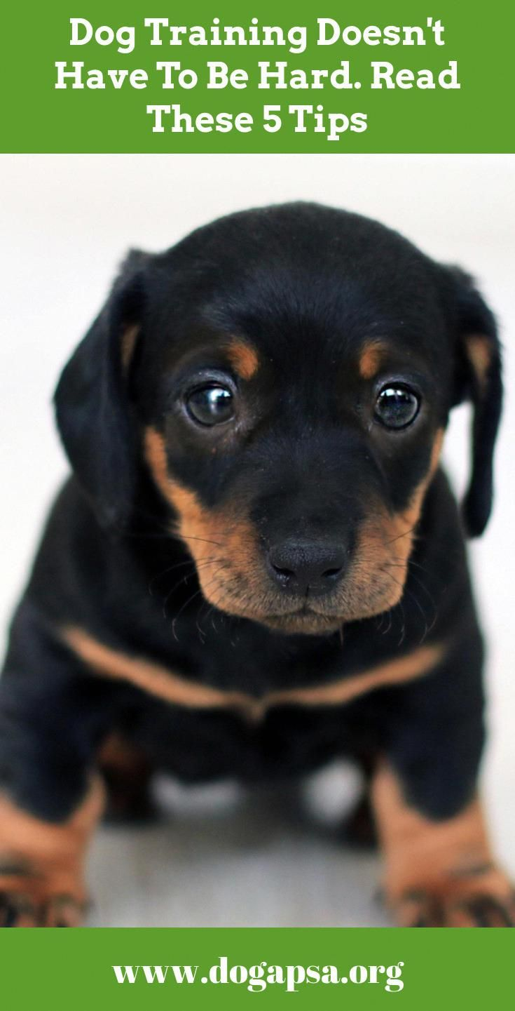 Need Support With Pet Dog Training Consider These Pointers When