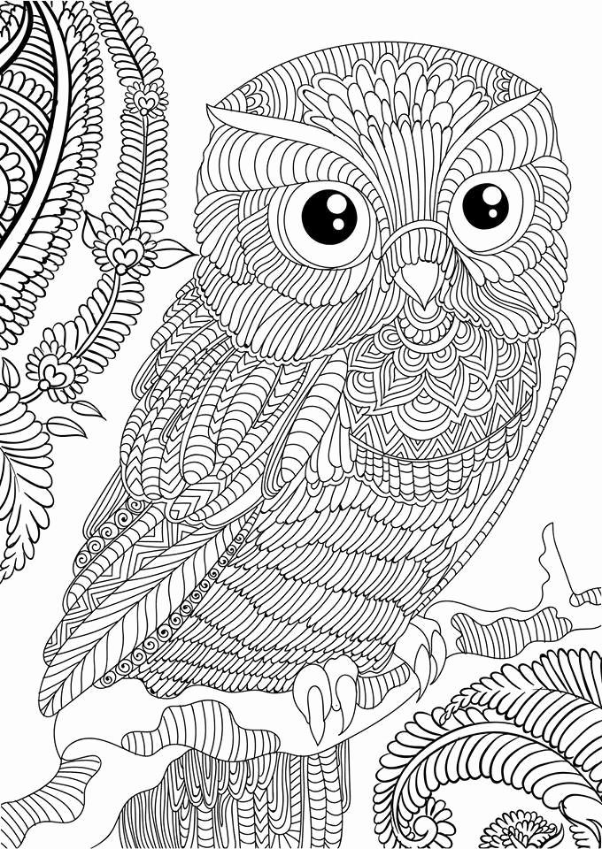 Hard Coloring Pages Of Owls For Kids In 2020 Owl Coloring Pages Animal Coloring Pages Halloween Coloring Pages