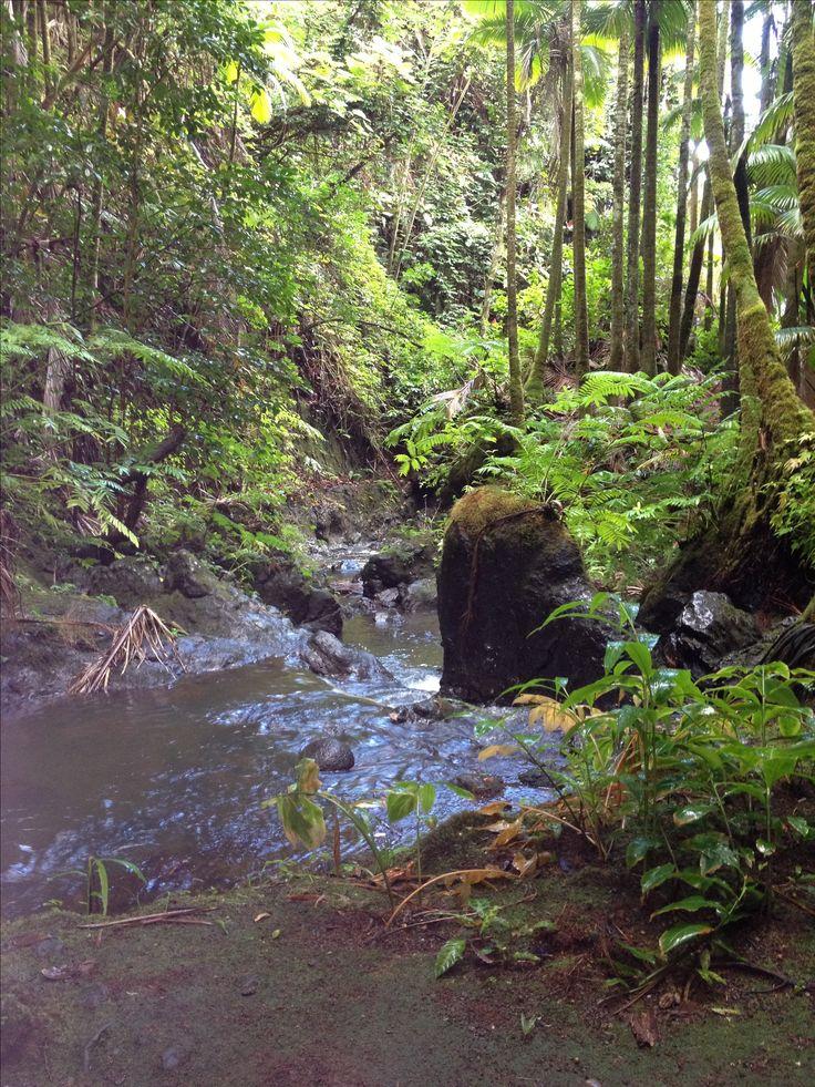 Botanical Gardens Kona Hawaii | Hawaii Tropical Botanical Gardens , Hilo |  Beautiful Places | Pintere