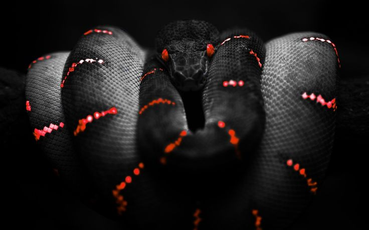 Snake Selective Coloring