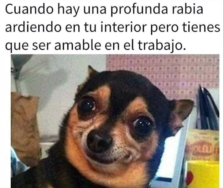 Follow Us Meme Memes Funny Gracioso Humor Siguenos Comparte Chistes Graciosos De Animales Memes Divertidos Sobre Perros Memes Divertidos