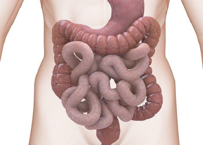 Les gens prêtent assez peu d'importance au bon fonctionnement du colon. Pourtant, il s'agit d'une partie essentielle du corps nécessaire à son bon fonctionnement et à sa bonne santé. Le colon, également connu sous le nom de «gros intestin», élimine l'eau, le sel et certains nutriments en formant des selles. Un colon qui ne fonctionne …